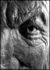 Prof Stanleys eye