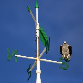Osprey on South Mole lighthouse, Fremantle WA