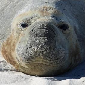 Sorrento seal_14 CG